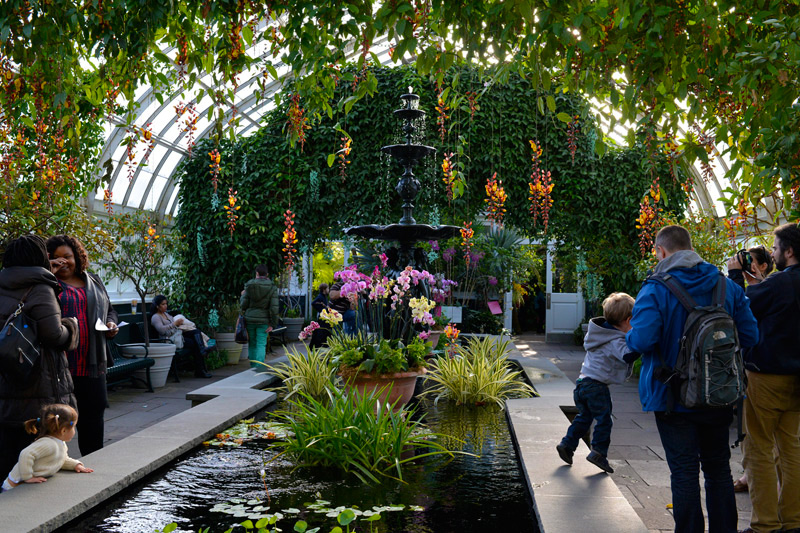 The Orchid Show1