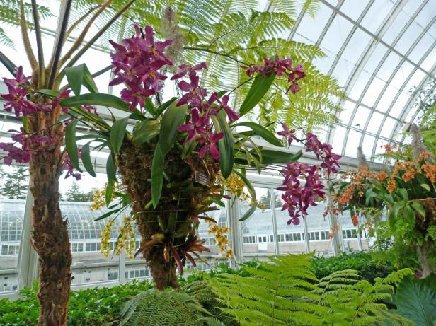 The Orchid Show2