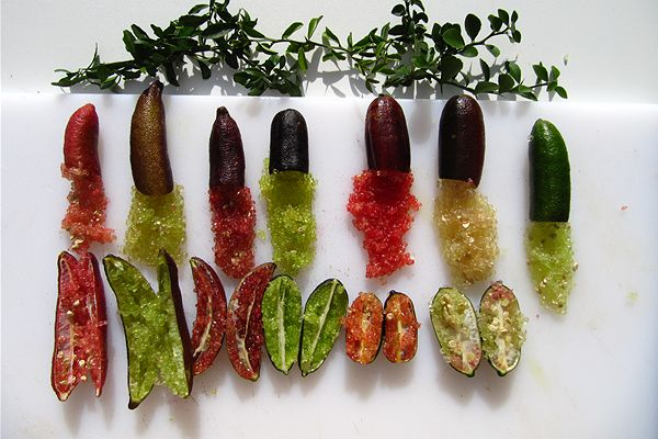 finger lime 1